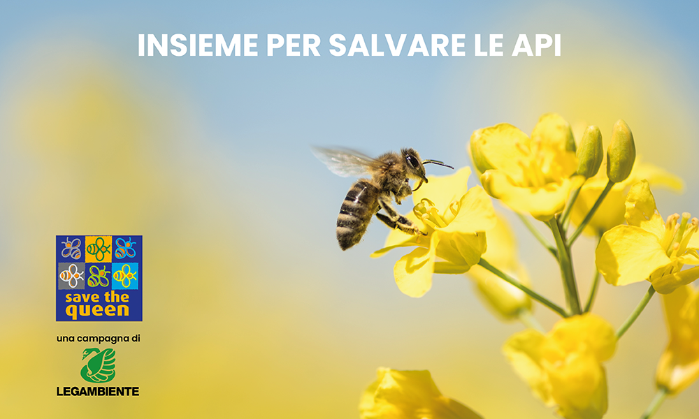 Insieme per salvare le api