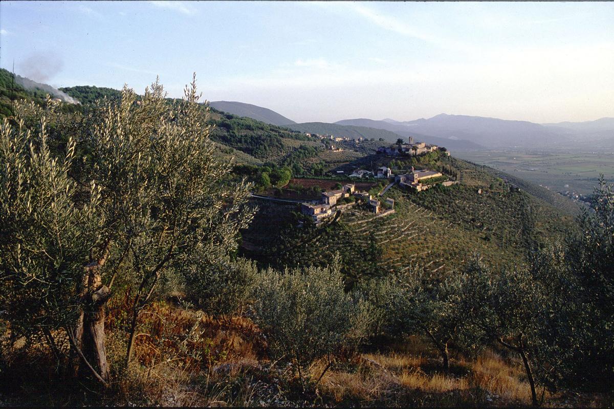 Terre Francescane: un extravergine che profuma di tradizione