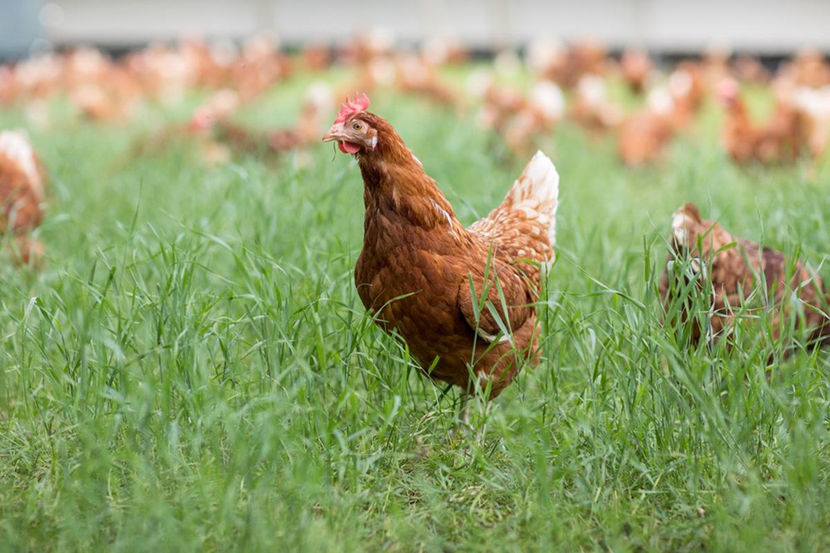 Eurovo e Le Naturelle: l'innovazione che nasce da un uovo.