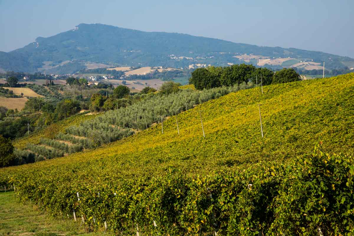 Cantine di Castignano: un lavoro corale per dei vini eccellenti