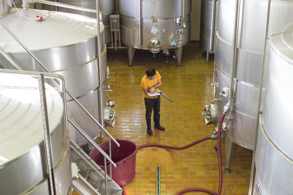 Da Còlpetrone uno dei vini più antichi d'Italia: il Montefalco Rosso